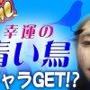 095 幸運の青い鳥でギャラGET!?【こびドル#95】
